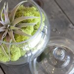 Caring for Your Succulents