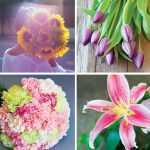 Choosing the Best Flowers for Mom