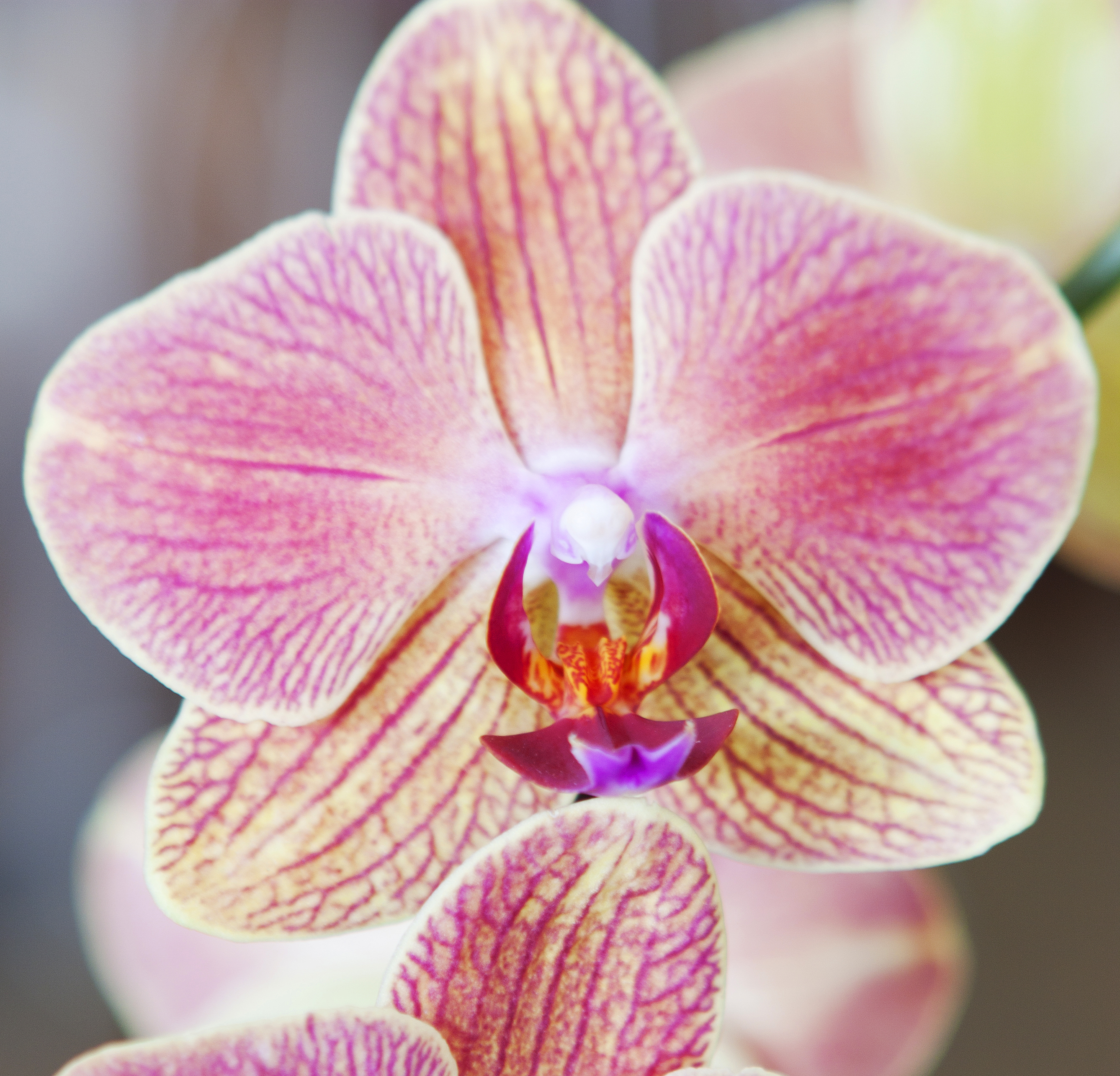 Mothers day flowers orchid