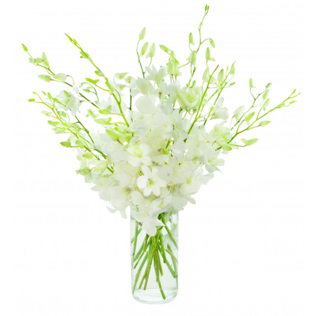 All White Dendrobium Orchids