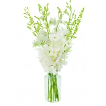 All-White Dendrobium Orchid Bouquet (10 White Orchids)