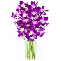 Violet Orchids (10 Purple Orchids)