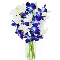 Set Sail (5 Blue & 5 White Orchids)