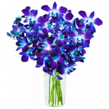 Orchid Flower Arrangements And Bouquets Online Delivery